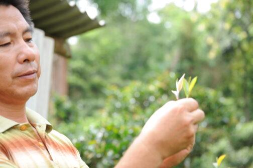te-mesteren Yang Guangqing
