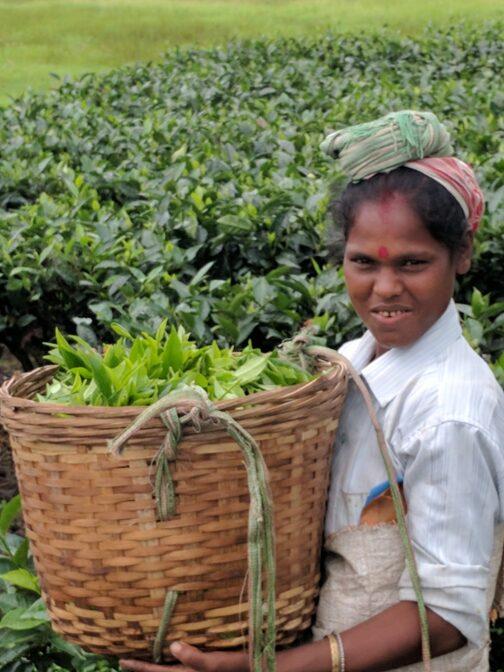 Assam produktion