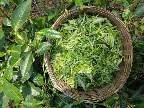 2. Flush Assam