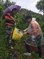 Aiyun samler jordprøver